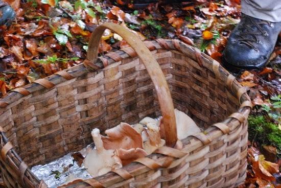 Setas en otoño en Cuenca